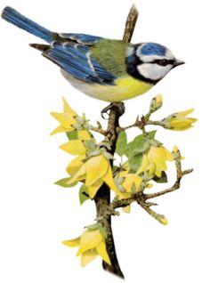 tubes oiseaux,birds,png