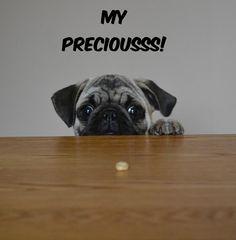 Funny Pug Dog Meme LOL Our Pug Boo Eyeballing a Cheerio. #pugmeme #funnypug #puglol #pugpuppy