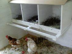 Gröna Hus Hen Chicken, Hen House, Hens, Farmer, Makeup Tips, Google, Animaux, Chicken Pen, Chicken Houses