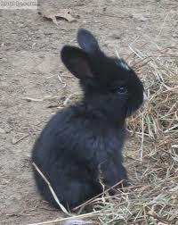 baby bunnies - Google Search