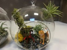 Air plant terrarium using CB2 glass orb and mini bicycle and dog