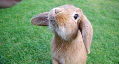 """""""Due anni di carcere per chi mangia coniglioin Italia: animali da compagnia come i cani"""""""