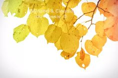 Autumn leaves restyled: flora042