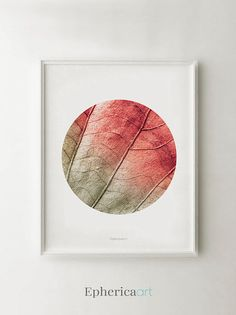 Coral wall art photography Coral modern office art Coral