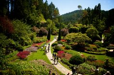 Photographer Pernille Westh | The Butchart Gardens photographed in Vancouver Island, Canada · Get my 7 FREE basic photography tips - you NEED to know right here; http://pw5383.wixsite.com/free-photo-tips |