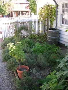 The Herb Garden at Old Economy Village in Ambridge, PA.