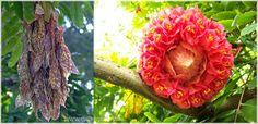 Jenis-Jenis Pohon Sapu Tangan Yang Harus Anda Ketahui