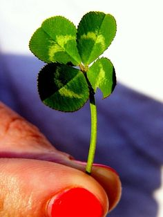 Heather and her four leaf clover