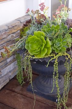 Succulents are low maintenance. Place them in a vintage black urn next to your front door and forget about them! @D L Rhein
