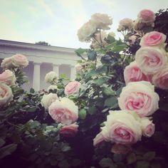 #theseustempel #wien #volksgarten #vienna #rose #blumen Vienna, Floral Wreath, Wreaths, Spaces, Home Decor, Flowers, Homemade Home Decor, Door Wreaths, Deco Mesh Wreaths