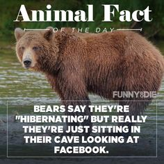 I had no idea Funny Animal Facts, Animal Memes, Funny Animals, Animal Humor, Hilarious, It's Funny, Funny Farm, Funny Stuff, Random Stuff