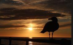 California 2015 California, Bird, Animals, Animales, Animaux, Birds, Animal, Animais