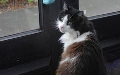 A pet cat in Plymouth, Devon has caught the same bus regularly for four years.