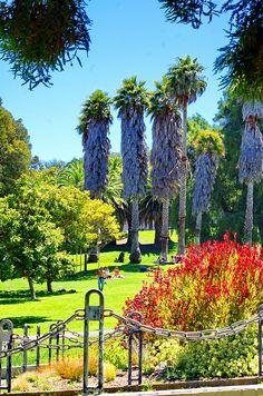 Golden Gate Park, San Francisco #travel #usa #california