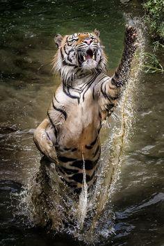 "beautiful-wildlife: ""Jump Baby Jump! by Dikky Oesin """