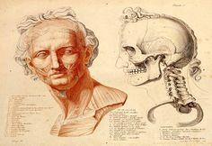 Anatomie du gladiateur by Jean-Galbert Salvage, 1812