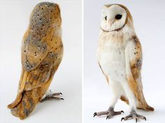 Yvonne Herbst, an artist based in the United States, is specialized in creating lifelike needle felted animals sculptures. Description from letslivelovelaugh.com. I searched for this on bing.com/images