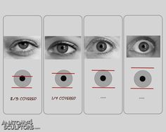 Anatomy For Sculptors - proportion calculator, store, services, video, links… Eye Anatomy, Human Anatomy Drawing, Drawing Eyes, Anatomy Art, Eyeball Anatomy, Realistic Eye Drawing, Anatomy Reference, Drawing Reference, Pose Reference