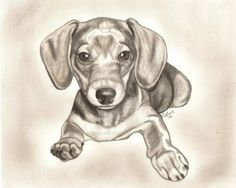 25+ Best Ideas about Dachshund