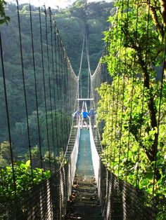 Costa Rica Cloud Forests.   Going to Costa Rica next fall. Hoping to get to do this!