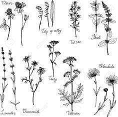 53994147-Hand-gezeichnet-Heilpflanzen-Kr-uter-Set-Skizze-Vektor-Illustration-Lizenzfreie-Bilder.jpg (1300×1289)
