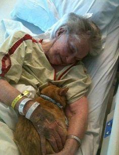 病院の粋な計らい。余命僅かなこの女性のため、唯一残された家族の猫の面会が許可された。 matome.naver.jp/odai/2134521672725107901