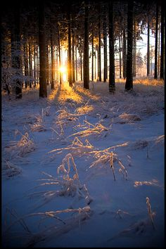 Cold winter morning by mjagiellicz on deviantART