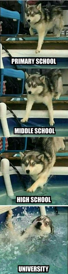 Funniest Memes, LOL Can't Stop Laughing New Year's Special) Why not start 2020 with a few laughs from these hilarious New Year memes?win, Daily Fresh Memes, Funny Pics and Quotes Funny Meme Pictures, Funny Animal Memes, Cute Funny Animals, Funny Cute, Funny Images, Hilarious, Top Funny, Funny Animal Pictures, Funny Shit