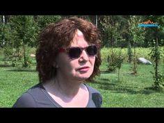 ▶ Ogrody Albiczuka - www.pulsmiasta.tv - YouTube