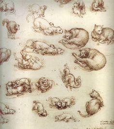 Studies of cats Leonardo da Vinci Sketchbooks , Resources for Art Students at CAPI ::: Create Art Portfolio Ideas @milliande.com