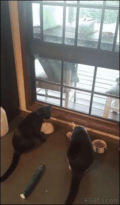 Funny cats - part 220 (40 pics + 10 gifs)