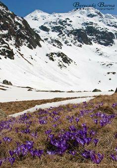 Homeland, Romania, Wonderland, Mountains, Nature, Travel, Naturaleza, Viajes, Destinations