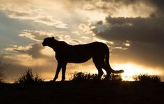 Unforgettable sunset in Namibia Photo by Gabriela Michanie — National Geographic Your Shot