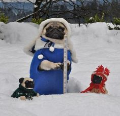 Jenny the pug and her babies are measuring the snowfall. Brindle Pug, Amor Pug, Pugs In Costume, Funny Animals, Cute Animals, Pug Rescue, Pug Mug, Pugs And Kisses, Pug Pictures