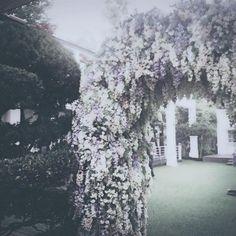 Yesung twitter update : 꽃받침