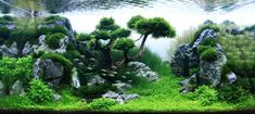 What is Aquascaping? Aquascaping is the craft of arranging aquatic plants along with hardscape, aesthetically within an aquascape aquarium. Planted Aquarium, Aquarium Terrarium, Aquarium Aquascape, Aquascaping, Aquarium Landscape, Nature Aquarium, Aquarium Design, Aquariums, Conception Aquarium