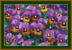 Purple Pansies Cross Stitch Pattern
