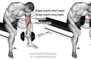 Dumbbell reverse-grip concentration curl exercise