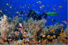 Национальный парк Рас-Мухаммед – #Египет (#EG) Наверняка частые гости Египта уже знакомы с этим удивительным местом. Национальный парк Рас-Мухаммед на Синайском полуострове включает удивительной красоты коралловые рифы, изобилующие морской живностью, и часть прибрежных территорий, так же не лишенных очарования.  #достопримечательности #путешествия #туризм http://ru.esosedi.org/EG/places/4149702/natsionalnyiy_park_ras_muhammed/