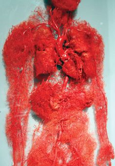"Blood vessels in the human body - image from ""I fucking love science"" The Human Body, Our Body, Life Science, Science And Nature, Weird Science, Gunther Von Hagens, Circulatory System, Medical Science, Forensic Science"