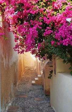 Cool Wallpaper, Nice Wallpapers, Under The Tuscan Sun, Garden Features, Santorini Greece, Mediterranean Style, Interior And Exterior, Planting Flowers, Pergola