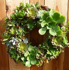 Succulent Wreath by The Greenery Nursery