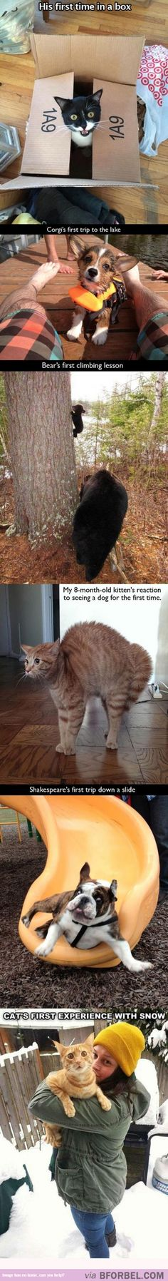 "6 Animals Had Their ""First Time""s…"