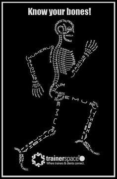 Skeleton Typogram, A Human Skeleton Illustration Made Using The Words For Each Bone. Nursing school just got a little easier Anatomy Bones, Human Anatomy, Anatomy Art, Yoga Anatomy, Anatomy Study, Anatomy Reference, Greys Anatomy, Human Skeleton, Skeleton Art