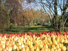 Tulip Festival, Morges, Switzerland 2013