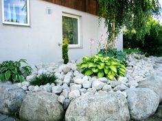 Galleri - Velholdt Park og Hage AS Garden, Plants, Garten, Lawn And Garden, Gardens, Plant, Gardening, Outdoor, Yard