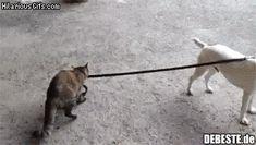Ich gehe mit meinem Hund spazieren! | Lustige Bilder, Sprüche, Witze, echt lustig