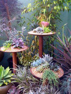 succulent pedestals.