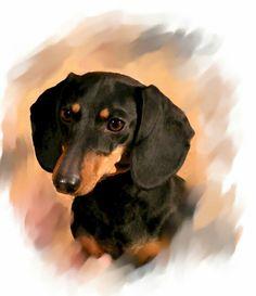 Basset Dachshund, Piebald Dachshund, Dachshund Art, Dachshund Puppies, Daschund, Dachshunds, Dogs And Puppies, Black And Tan Dachshund, Dog Stories
