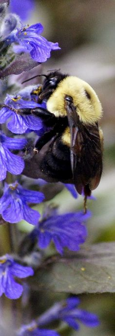 Bee spring #nature #photography